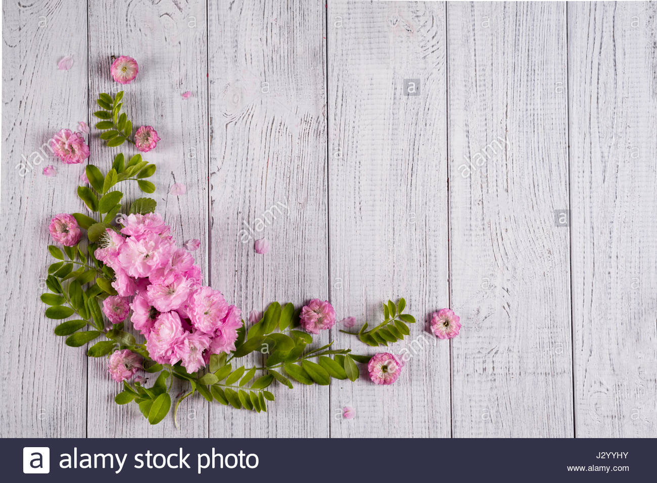 Frame of beautiful pink rose flowers on white wooden background,top ...