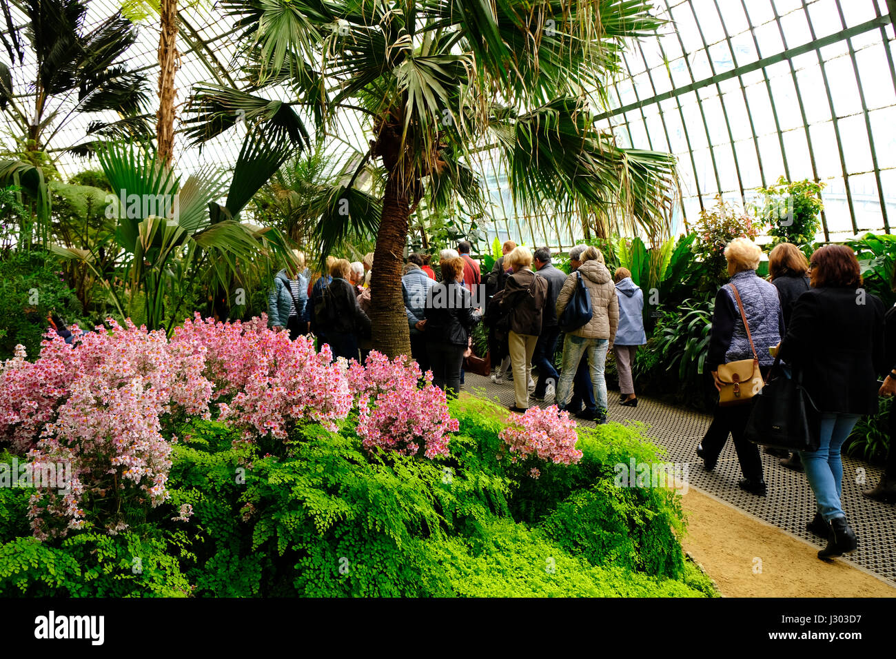 Visitors in the Royal Greenhouses of Laeken, Belgium - Stock Image