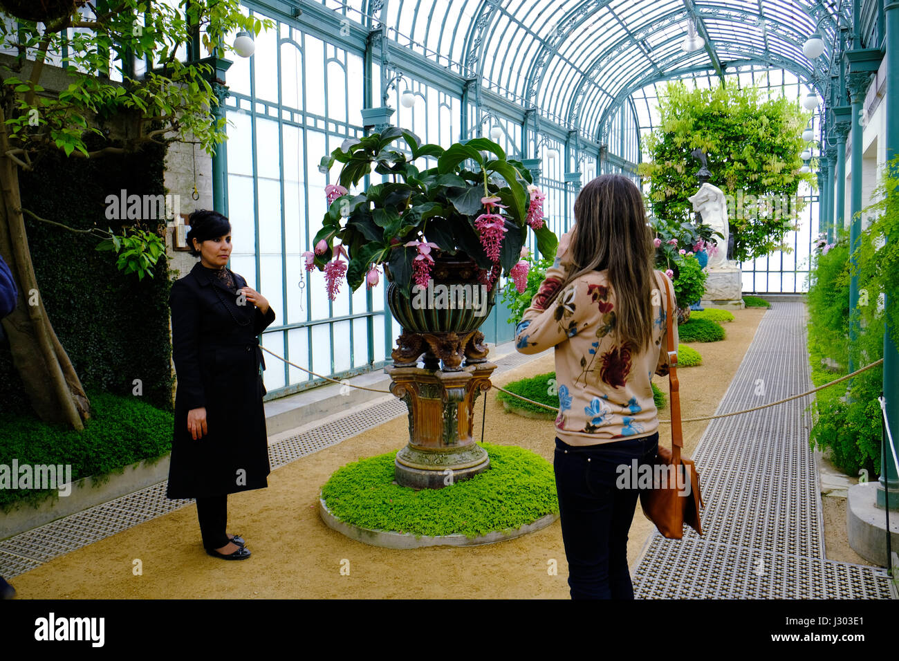 Vistor taking a photograph in the Royal Greenhouses in Laeken, Brussels - Stock Image