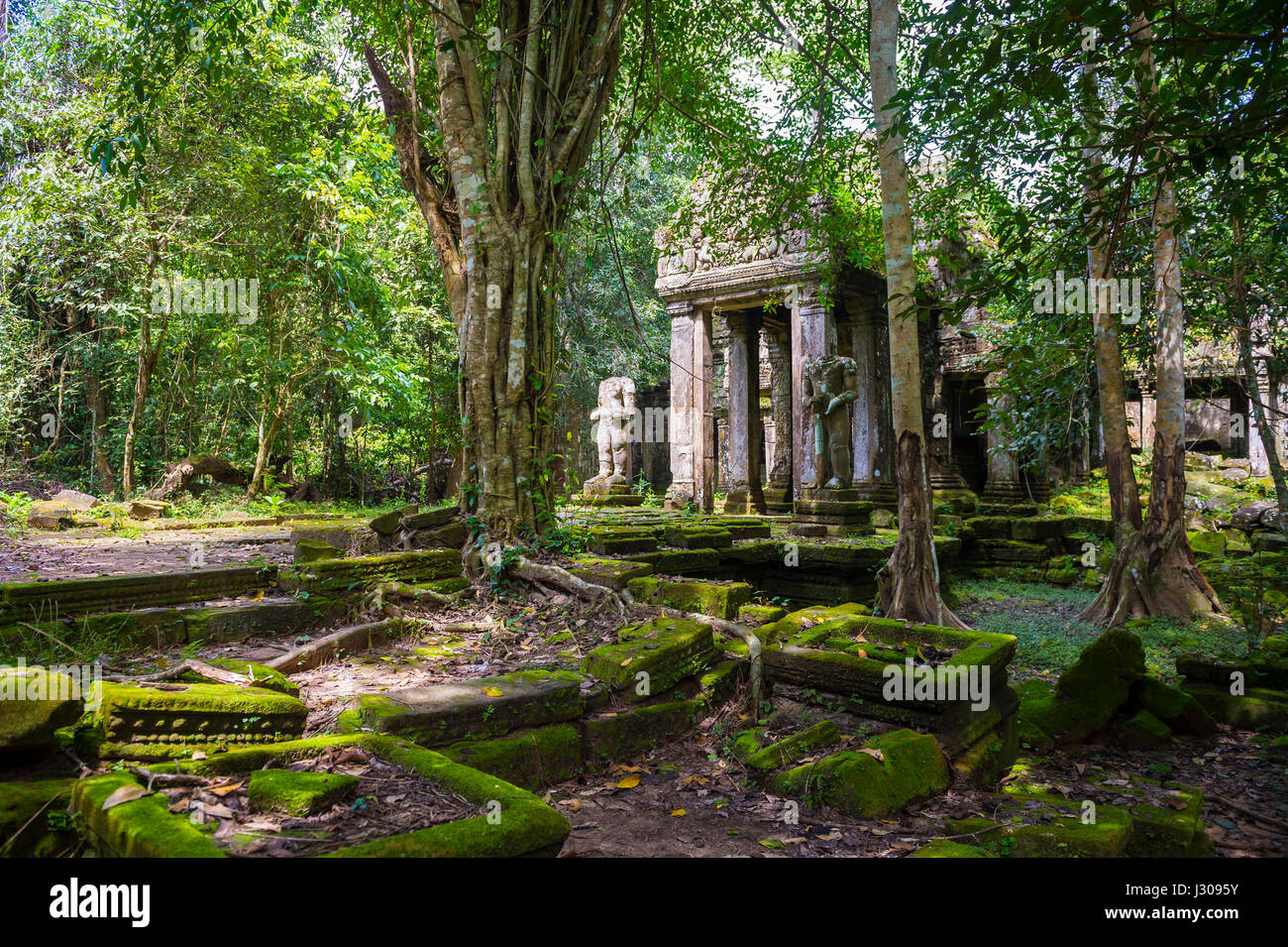 Scenic view of the jungle overtaking the stone temple complex of Angkor Wat, Cambodia - Stock Image