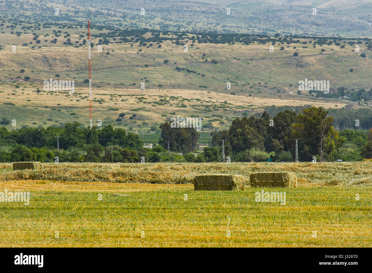 Pressed straw briquettes left of harvest lying on a field at sunset Pressed hay briquettes on the field - Stock Image