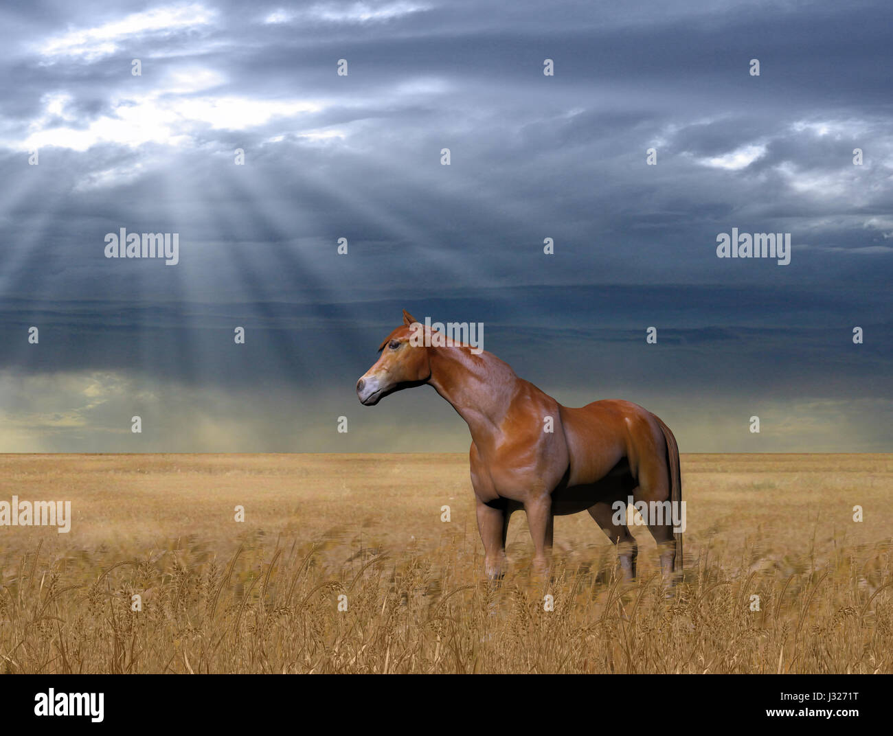 3D painting of a beautiful horse standing in a golden wheat field against a cloudy, rainy sky. - Stock Image