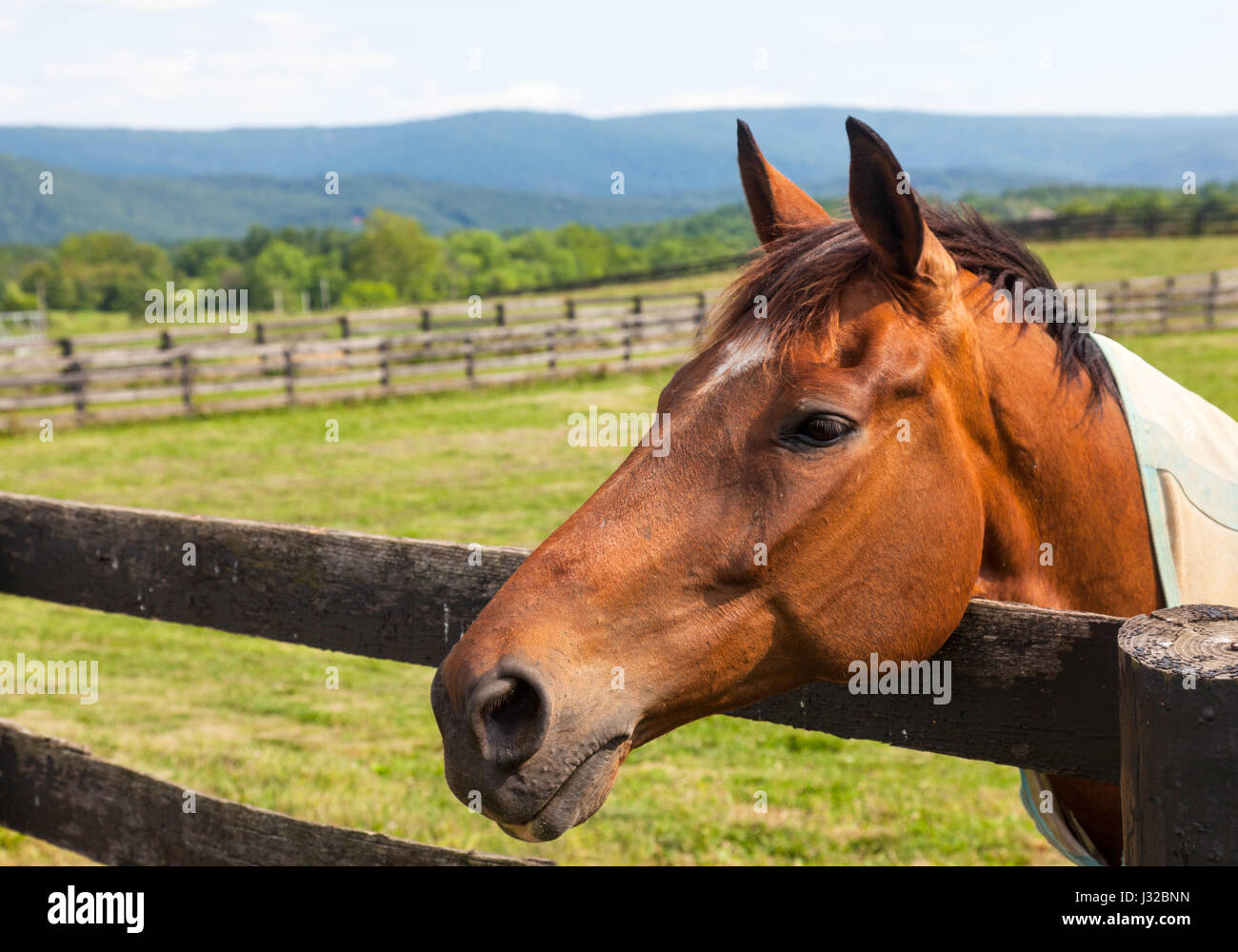 Head of a brown horse in a meadow leaning on a wooden fence with hills in background Stock Photo