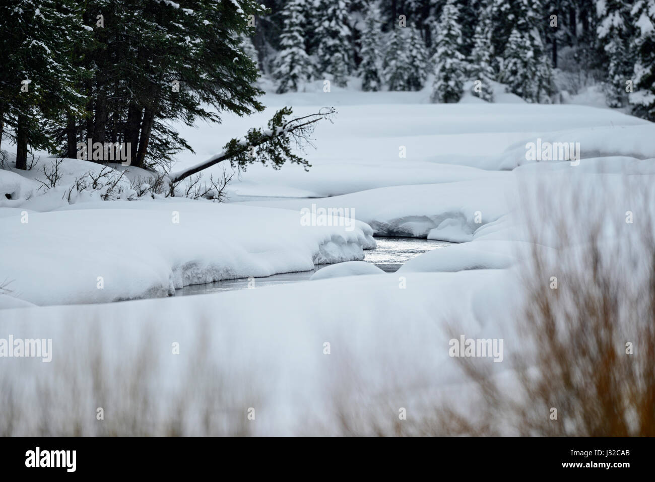 Soda Butte Creek in winter, banks coverd with fresh snow, wilderness and beauty of Yellowstone National Park, Wyoming, - Stock Image