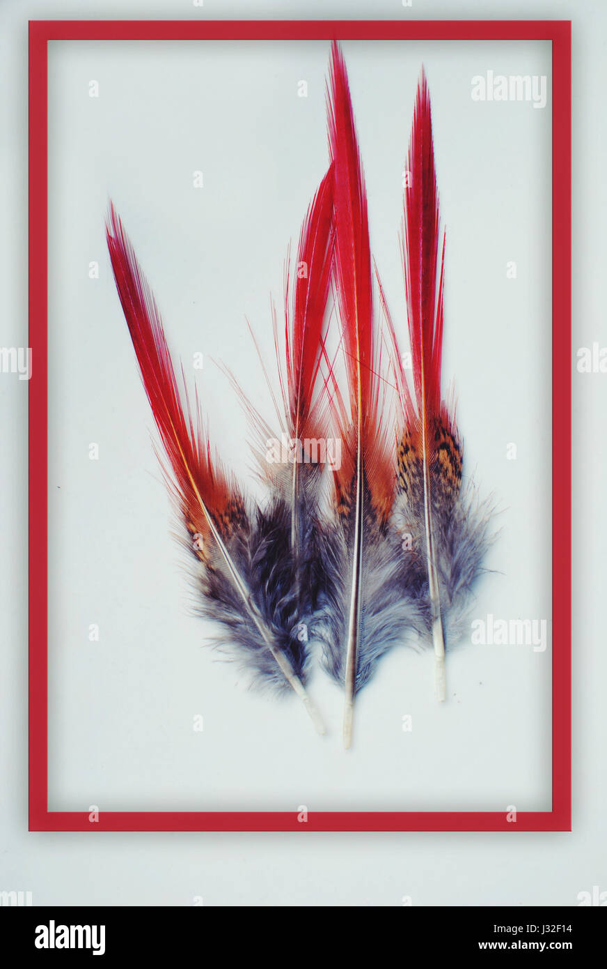 Red ended feathers. - Stock Image
