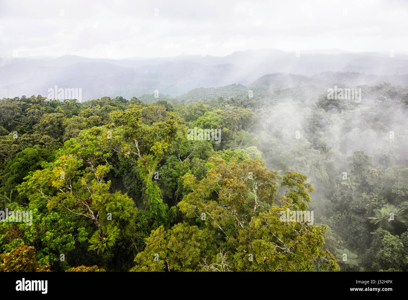 Clouds over pristine tropical rainforest canopy seen from Skyrail, near Cairns, Far North Queensland, FNQ, QLD, - Stock Image
