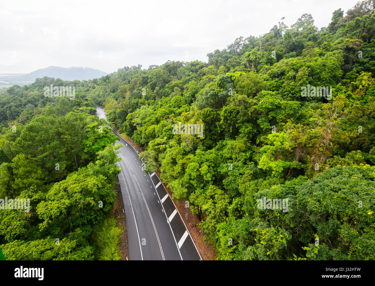 Road through pristine tropical rainforest seen from Skyrail, near Cairns, Far North Queensland, FNQ, QLD, Australia - Stock Image