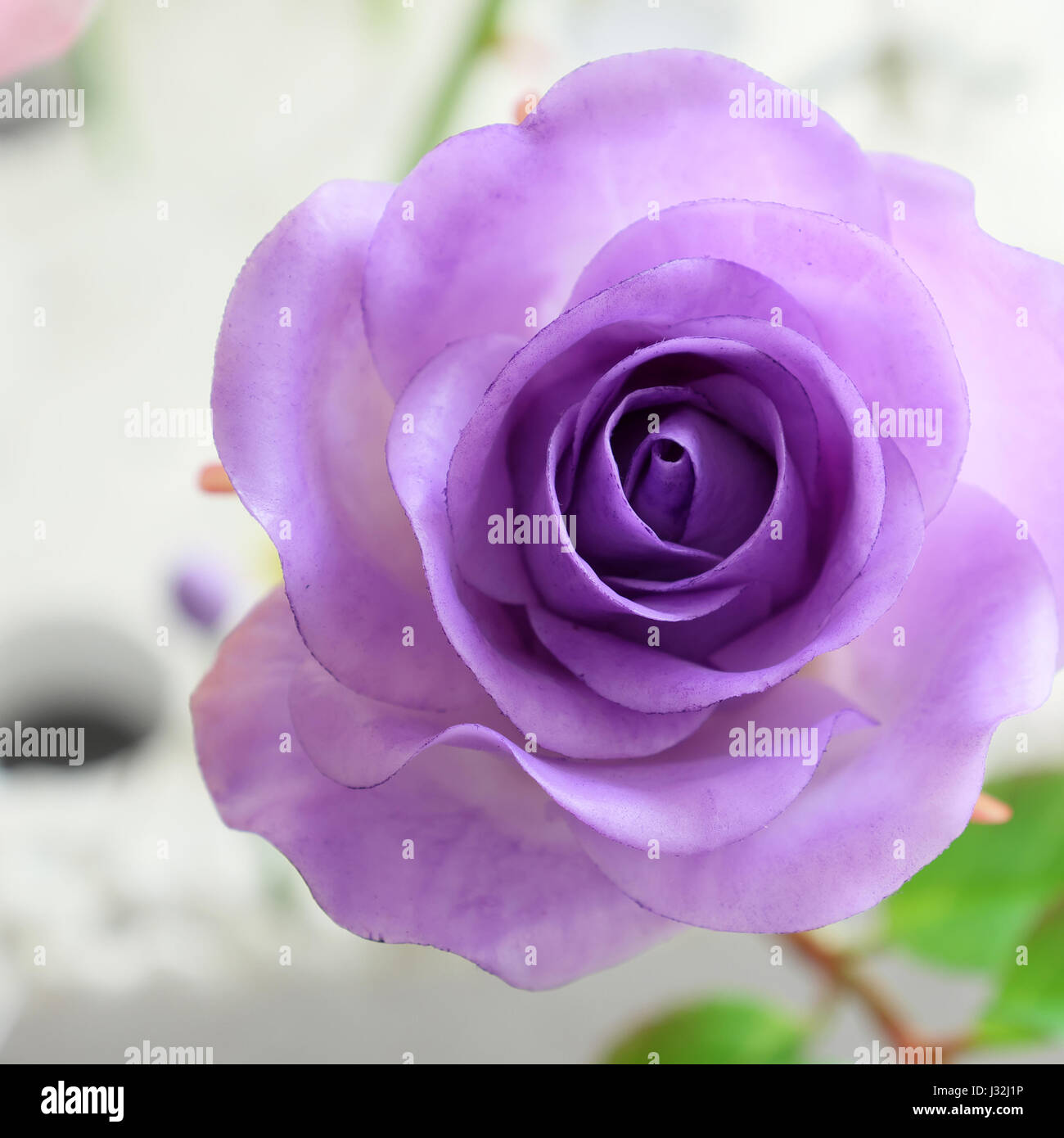 Wonderful Clay Art Close Up Of Violet Rose Flower Beautiful Stock