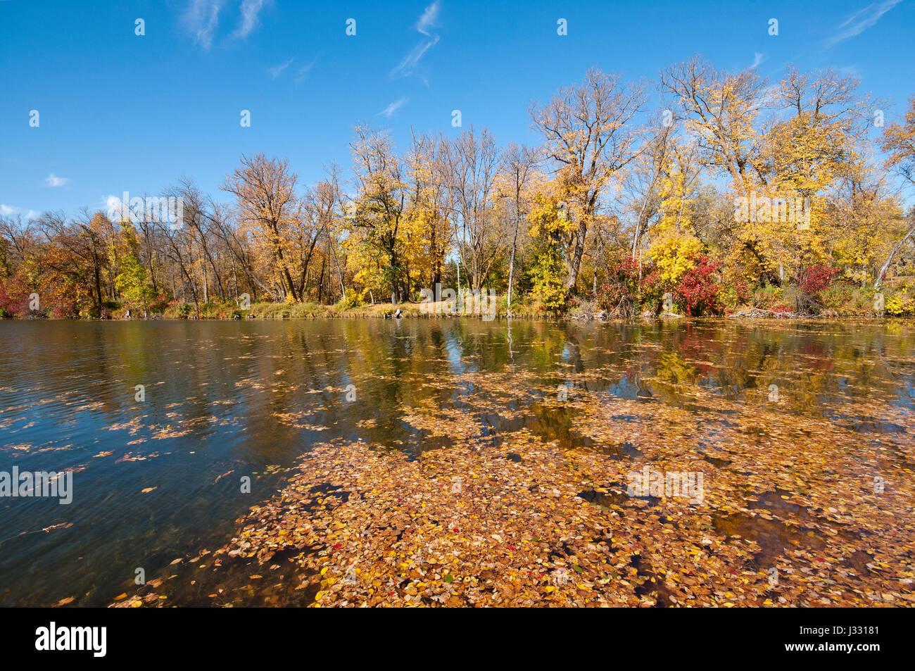 Marshs lake, fall foliage, Spruce Woods Provincial Park, Manitoba, Canada - Stock Image