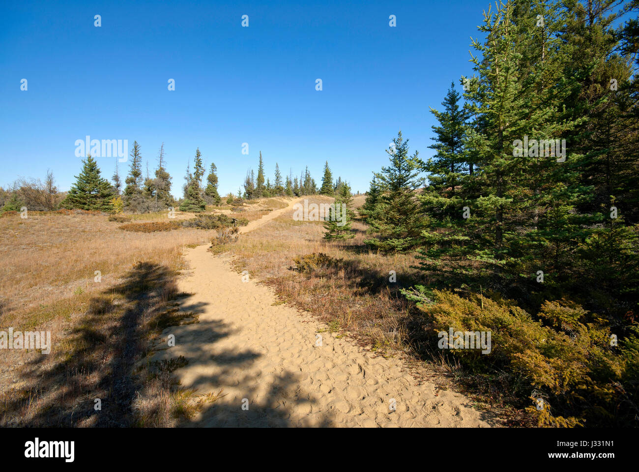 Spirit Sands trail, Spruce Woods Provincial Park, Manitoba, Canada - Stock Image