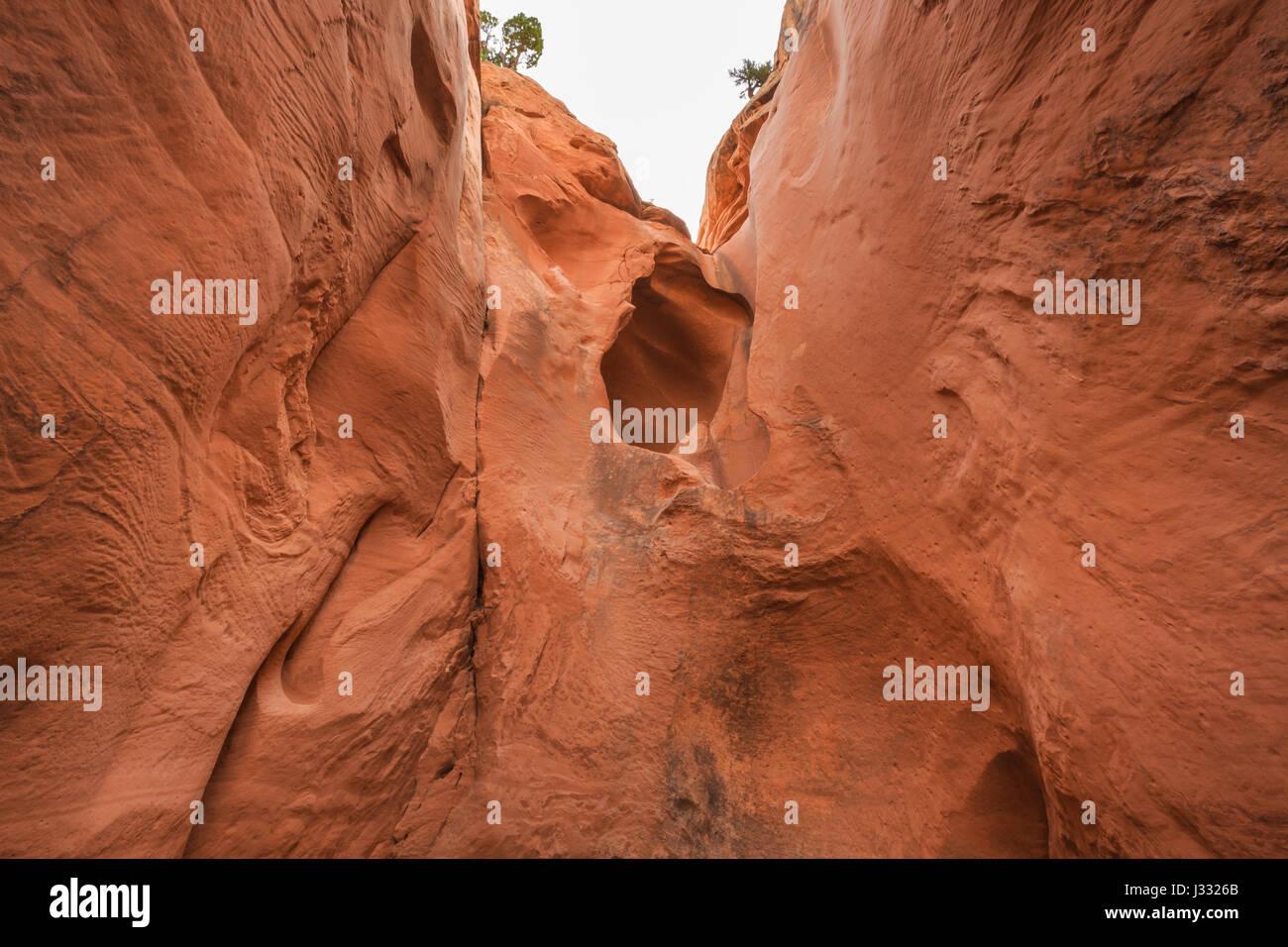 big horn canyon in the harris wash basin near escalante, utah - Stock Image