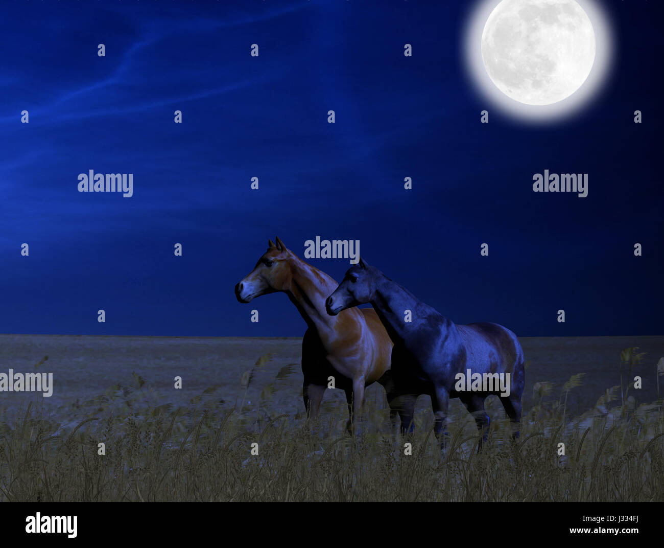 3D painting of beautiful horses standing in a wheat field at midnight under a full moon. - Stock Image