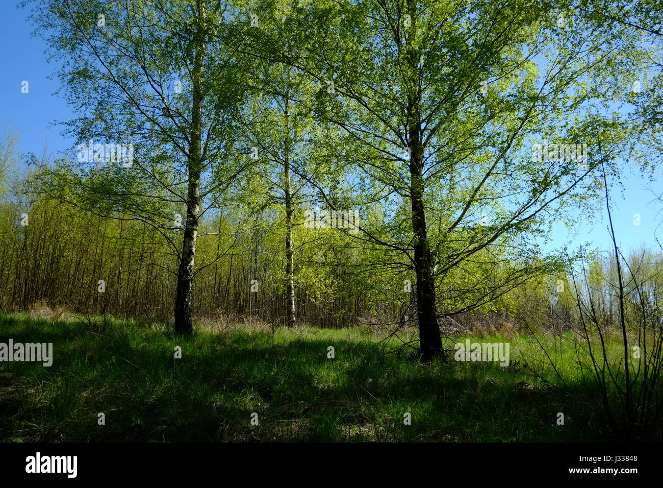Winiec, Northern Poland, in Spring - Stock Image