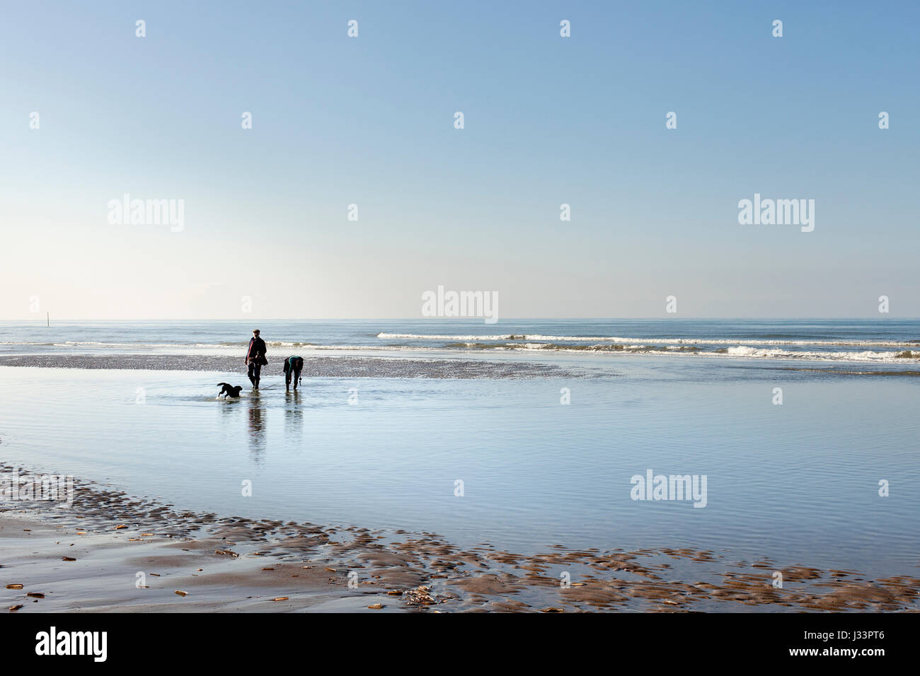 OOSTDUINERKE, BELGIUM - A couple  walking their dog on the beach. Stock Photo