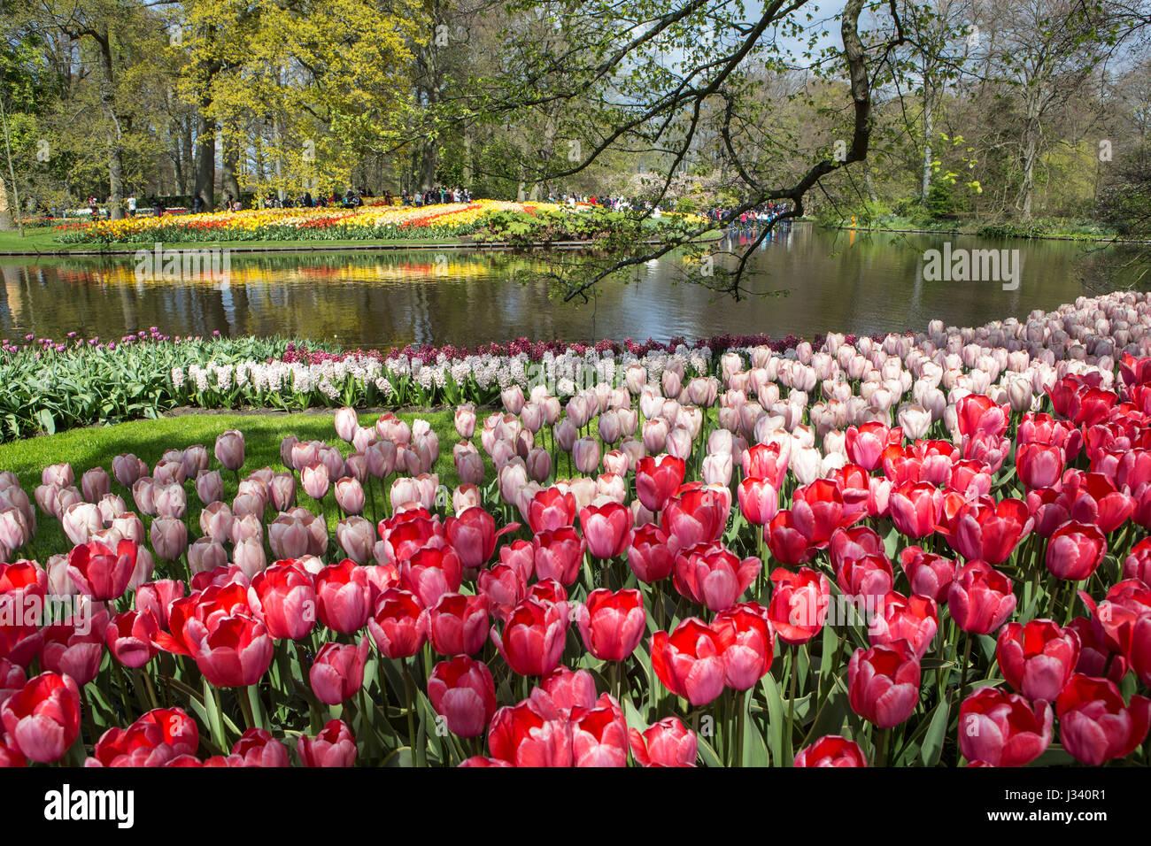 Various flower arrangements from the Keukenhof Flower Garden Holland 2017 - Stock Image
