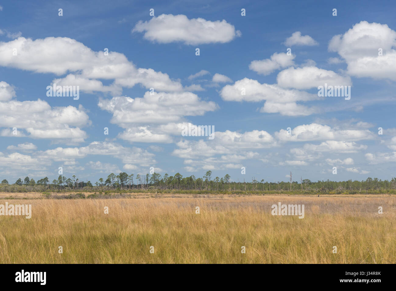 A view of Hopkins Prairie in Ocala National Forest in Florida. - Stock Image