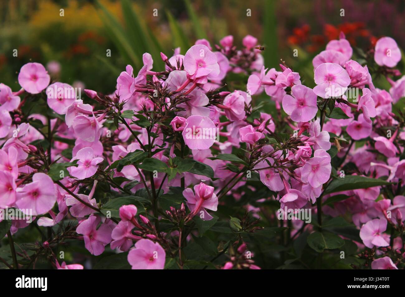 Little pink flowers in a bush with other flowers in the background little pink flowers in a bush with other flowers in the background mightylinksfo