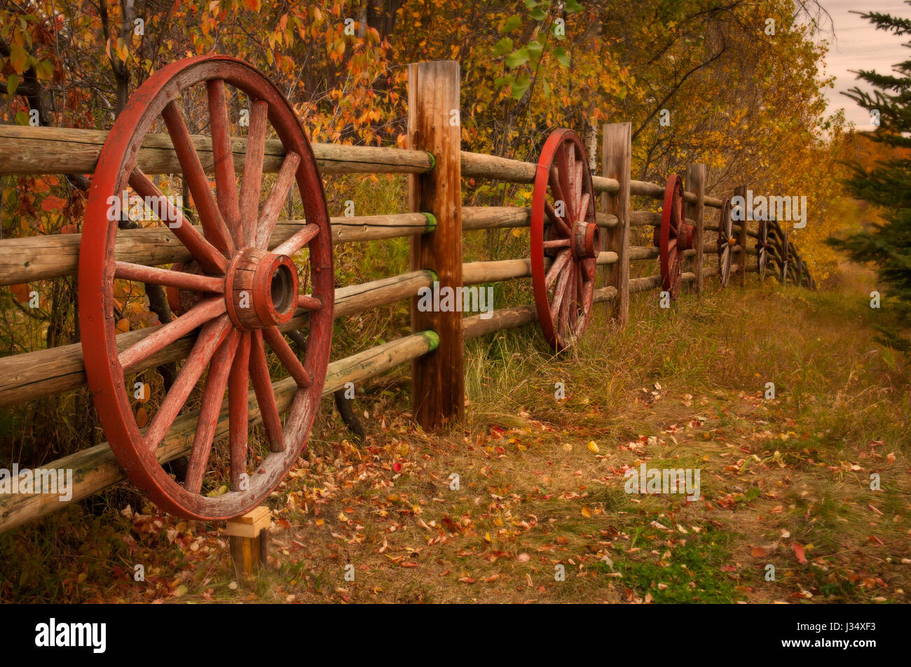 Country Fence With Wagon Wheels And Colorful Fall Leaves On ...