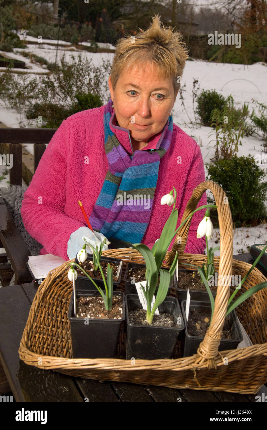 Gardener Val Bourne in the garden of her cottage in the Cotswolds, Gloucestershire,UK - Stock Image