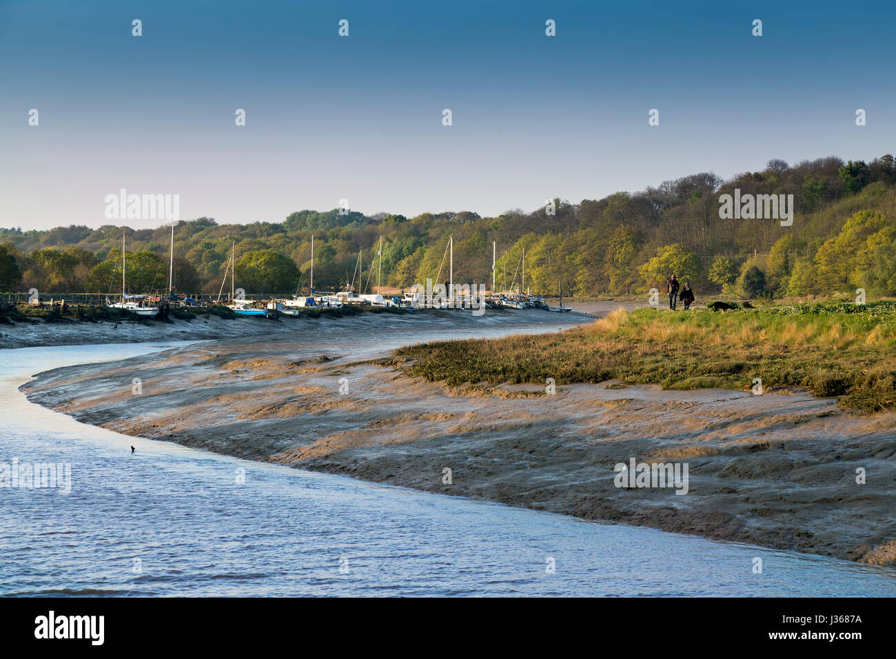 WALKERS ON THE FOOTPATH AT WIVENHOE NEAR COLCHESTER, AS VIEWED FROM ROWHEDGE ACROSS THE RIVER COLNE. - Stock Image