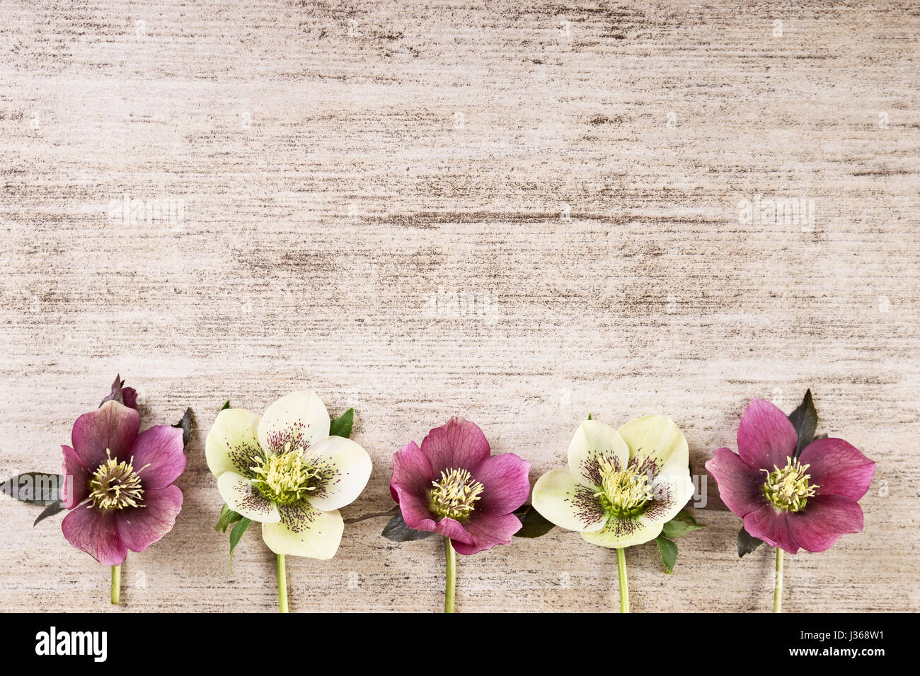 Vintage Frame Background With Spring Flowers In Pastel Colorp