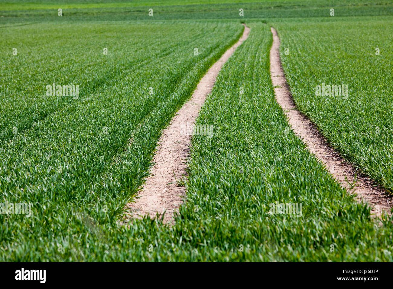 Agricultural fields near the village of Gewissenruh, Oberweser, Upper Weser Valley,  Weser Uplands, Weserbergland, - Stock Image