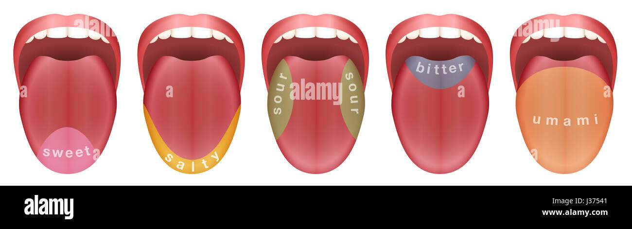 Tongue Taste Buds Stock Photos Tongue Taste Buds Stock Images Alamy
