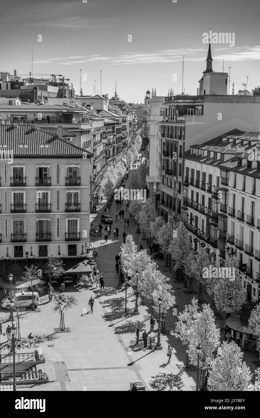 Blooming cherry trees from Plaza de Isabel II along Arenal street (Calle del Arenal) to Puerta del Sol square and - Stock Image