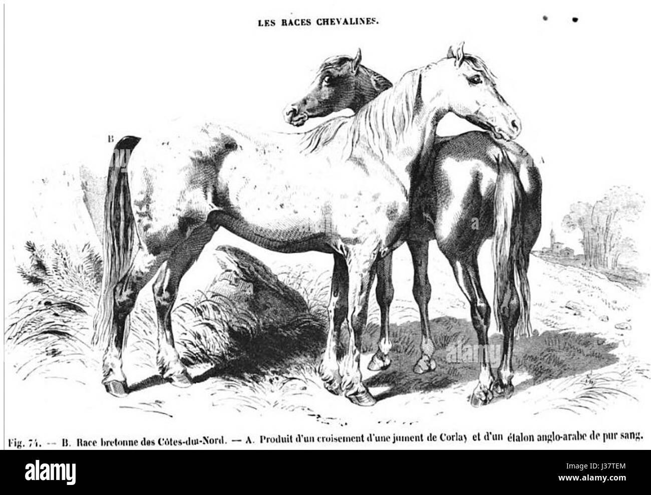 Cheval Acavallo En Et Loisirs Jambe Sports De Bois Équitation A54R3jL