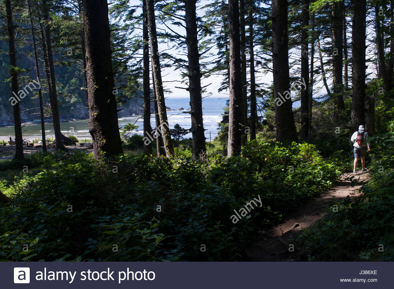 Short Sands Beach seen from Cape Falcon Trail, Oswald West State Park, Tillamook County, Oregon, USA - Stock Image