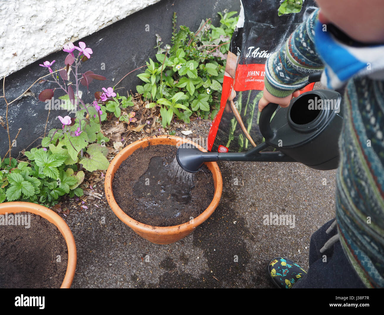 Two year old helps with planting seeds. One of a series of toddler in garden. Watering a plant pot with small watering can. Stock Photo