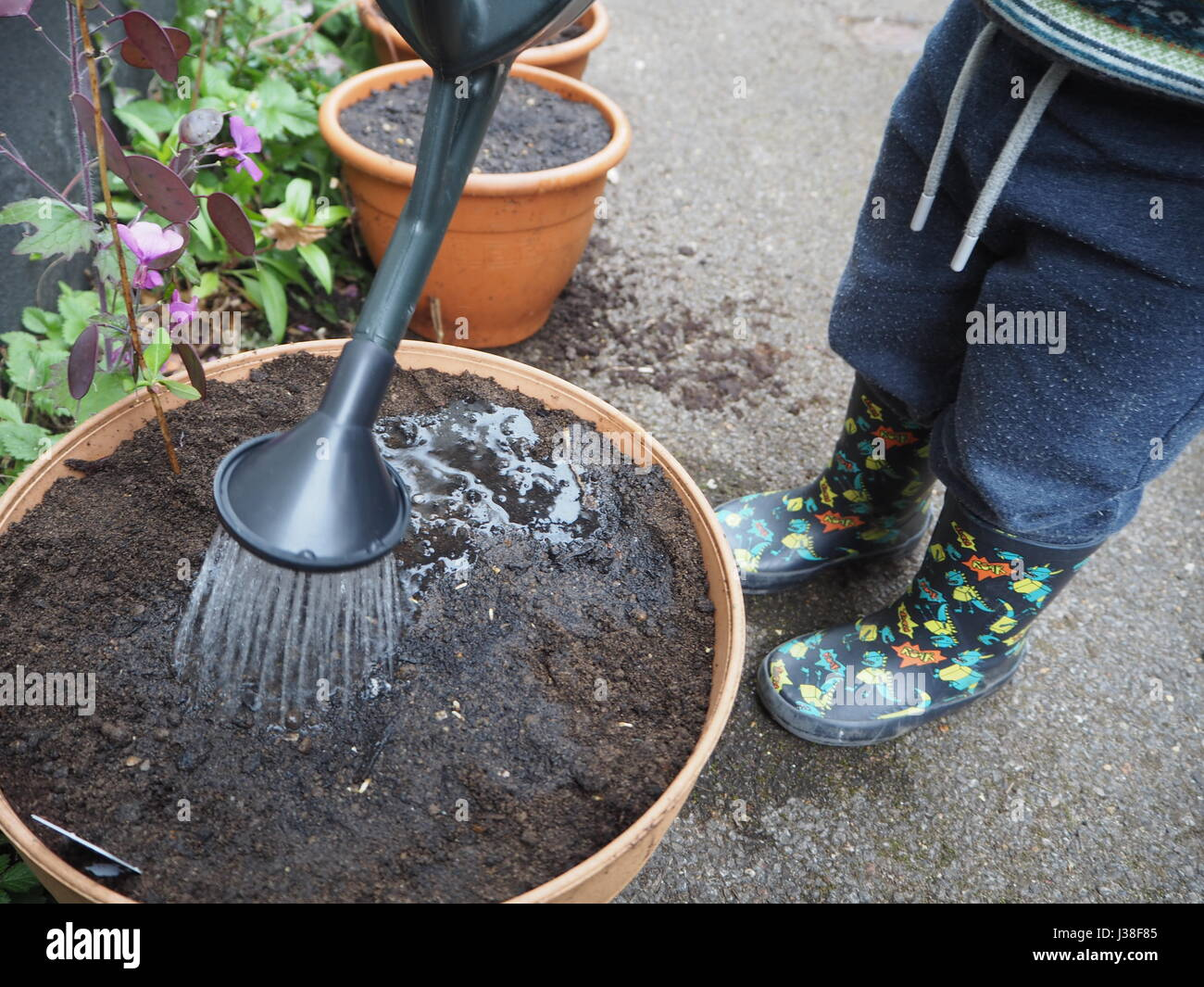 Two year old helps with planting seeds. One of a series of toddler in garden Stock Photo