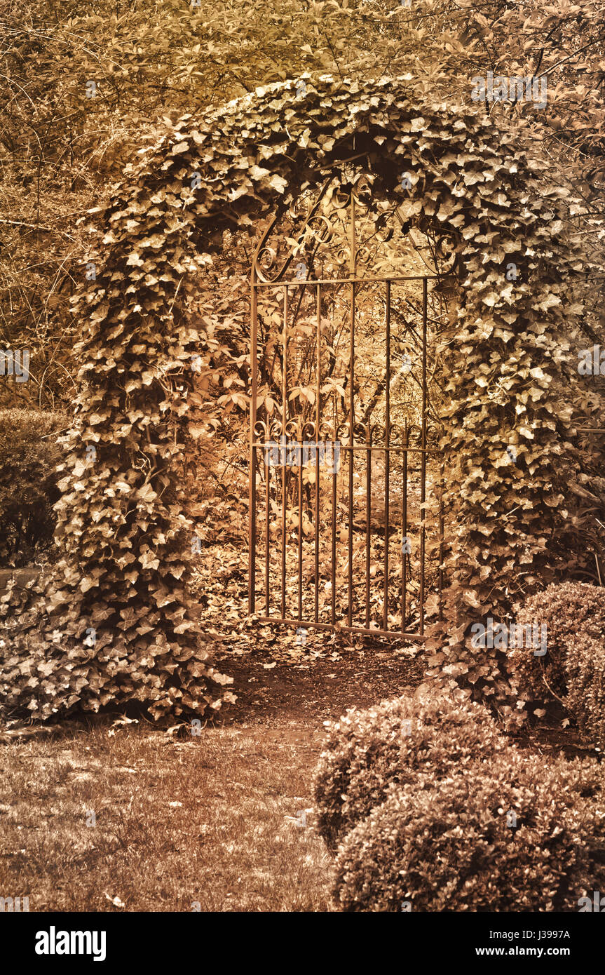 English garden with ornate wrought iron gate covered with ivy in ...