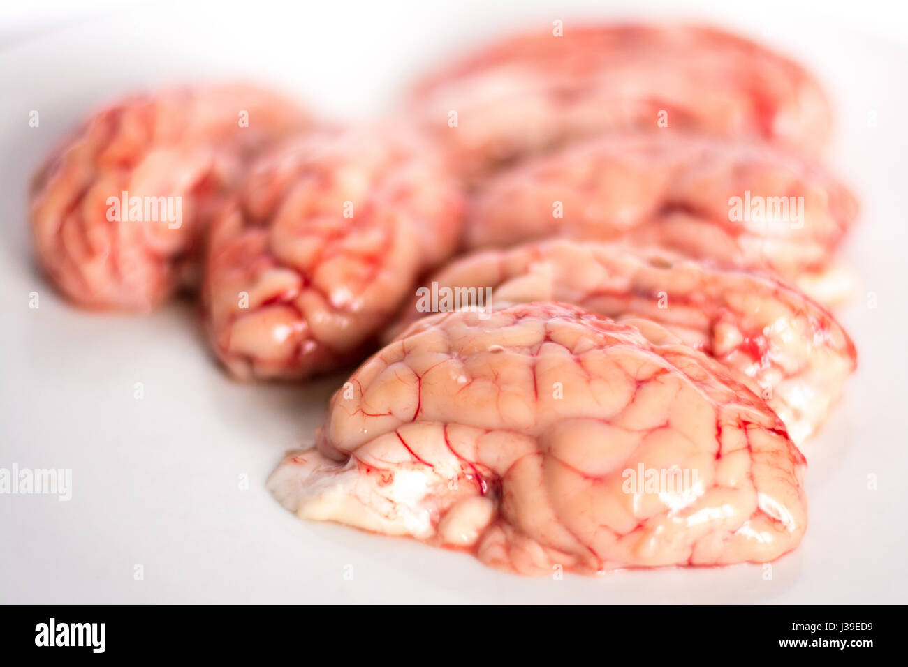 closeup of a brains on white background - Stock Image