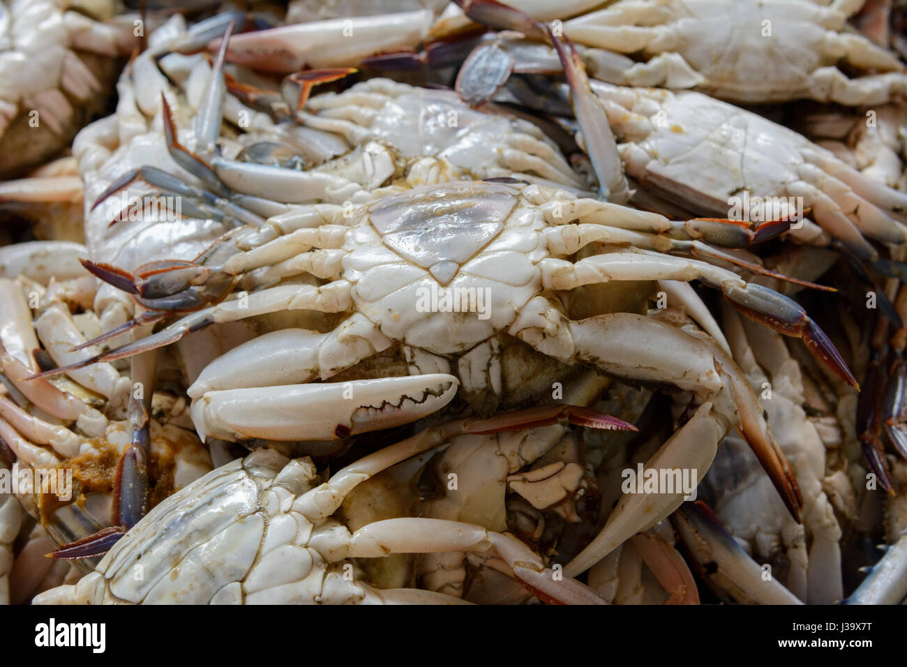 A pile of freshly caught crabs on sale at the fish market in Thalassery (Tellicherry), Kannur district (Cannanore), - Stock Image