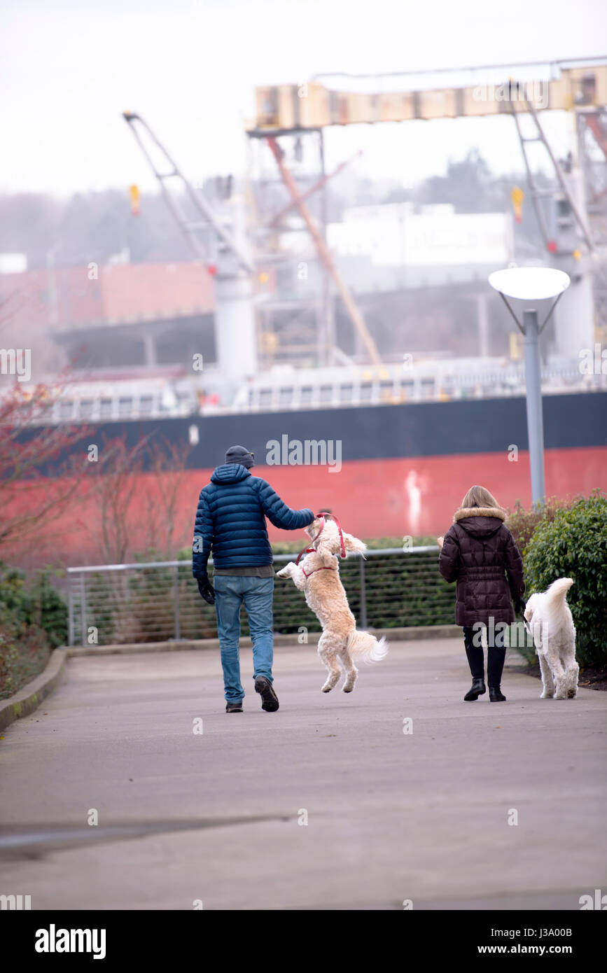A couple walks with their large domestic dogs with long hair, who love to play with the owner, on the quay at Willamette - Stock Image