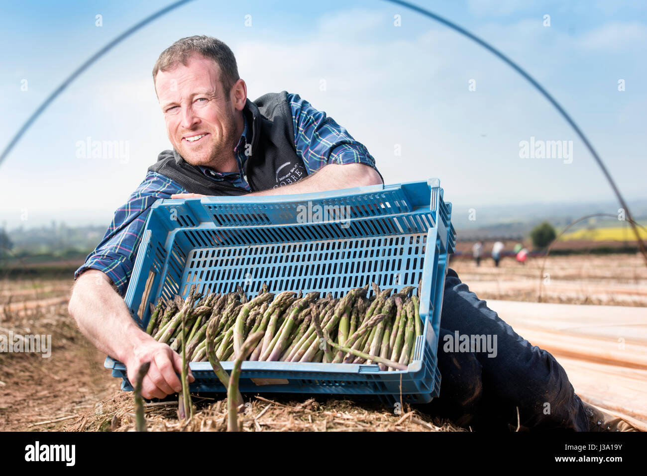 Asparagus farmer Chris Chinn of Cobrey Farms near Ross-on-Wye with some of his crop that has arrived unseasonaly - Stock Image