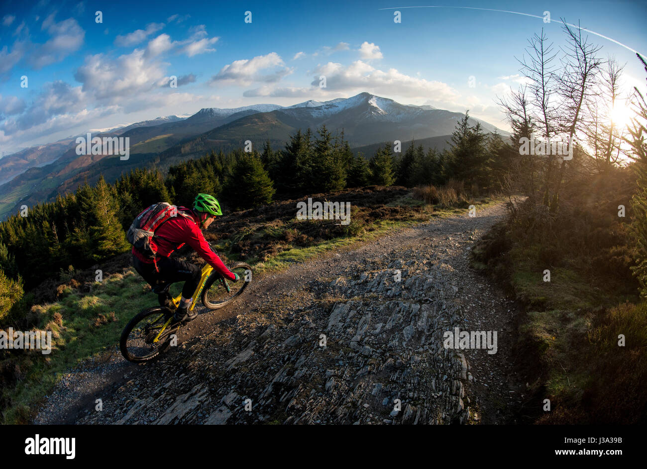 A mountain biker rides a trail at Whinlatter, England's only true Mountain Forest. - Stock Image