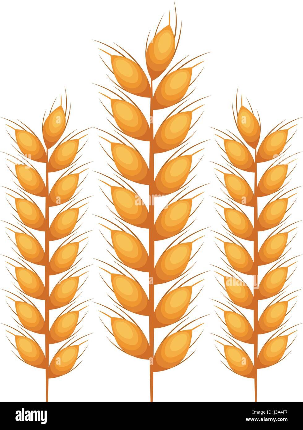 Isolated wheat ear design - Stock Vector