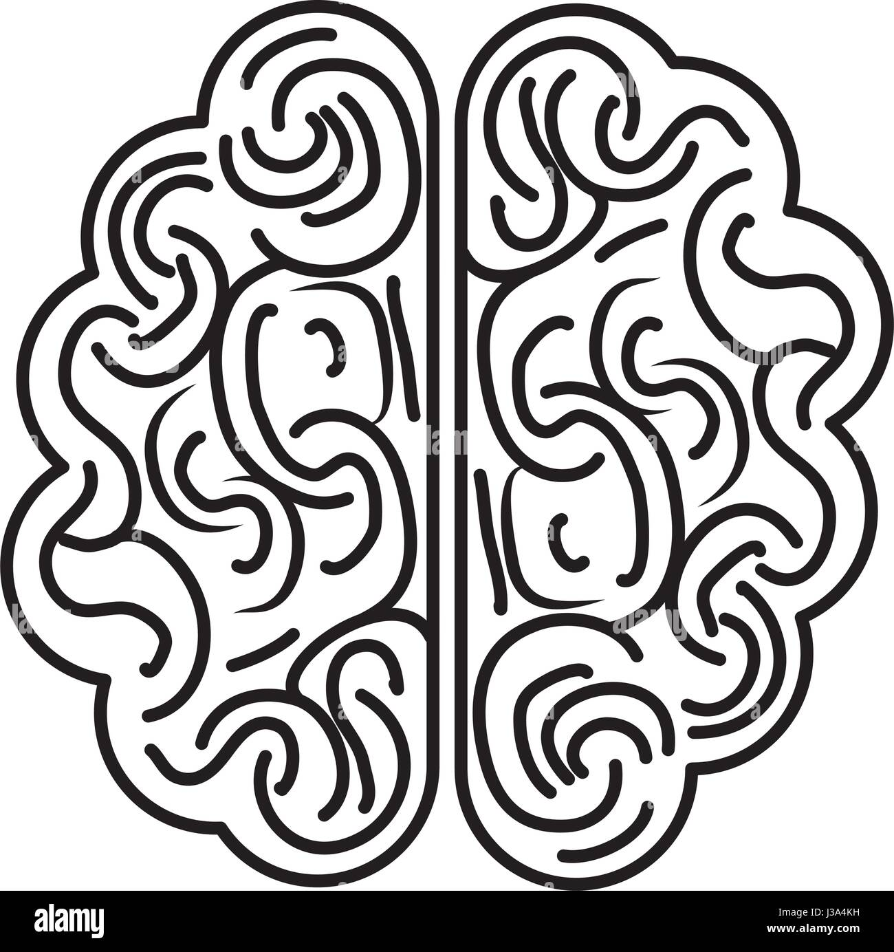 Isolated brain organ design - Stock Image