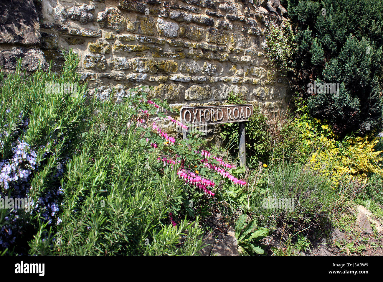 Summer planting Oxford Road Garsington Village - Stock Image