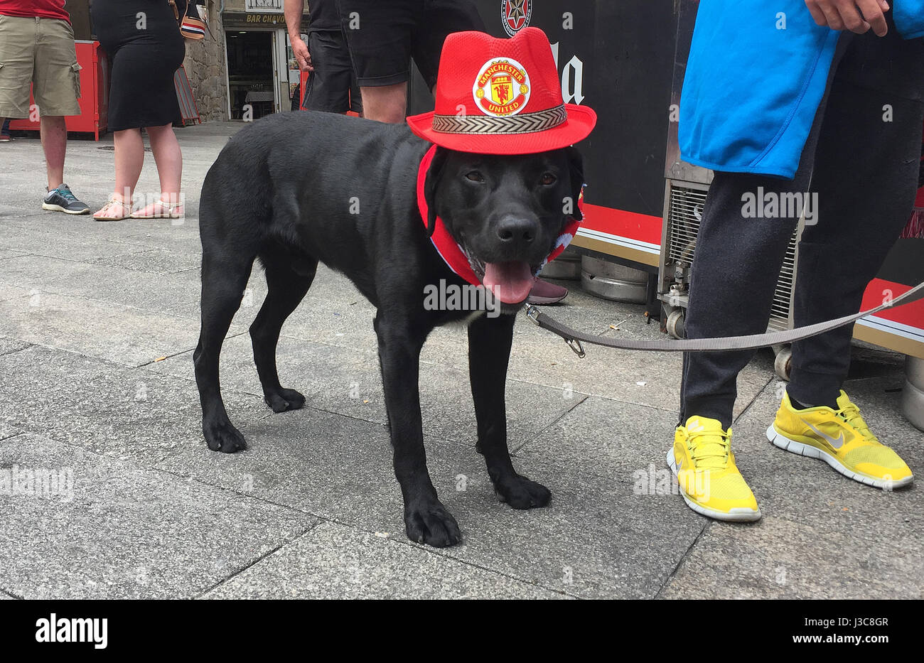 A Dog Wearing A Manchester United Hat Before The Uefa Europa League Stock Photo Alamy