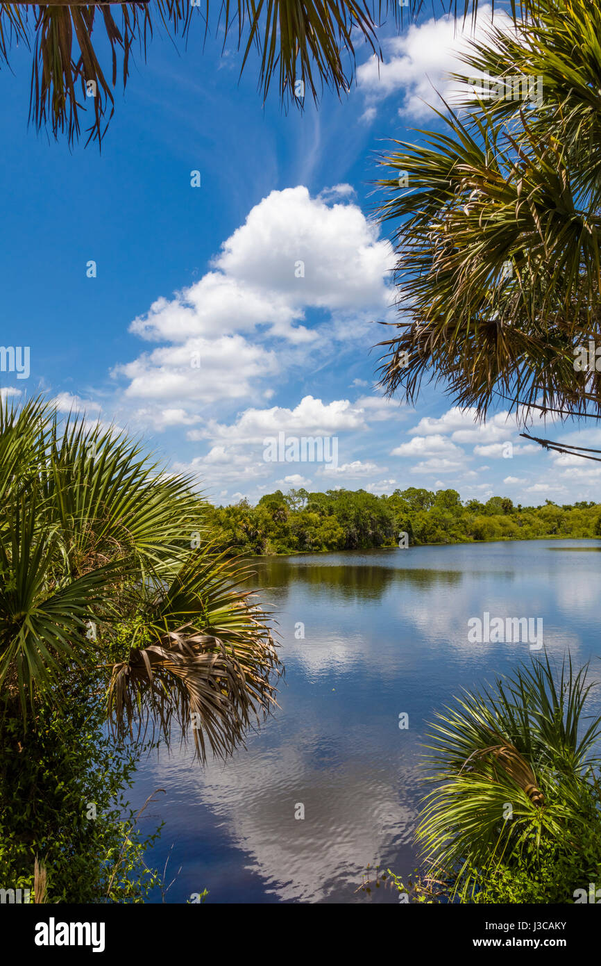 Deer Prairie Creek in Deer Prairie Creek Preserve in Venice Florida Stock Photo