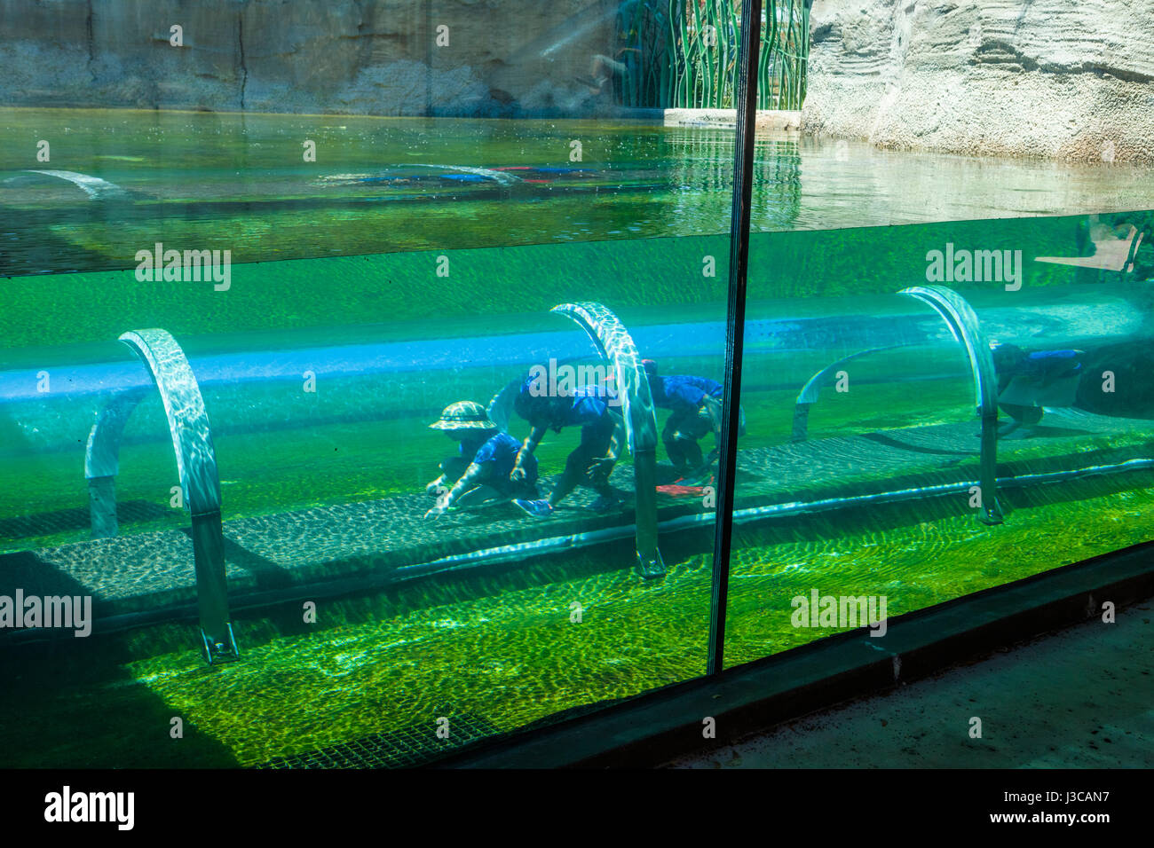 """Kids in Crawl-through """"tunnel"""" at the crocodile habitat in the Mission Eveerglades section of Zoo Miami also known - Stock Image"""