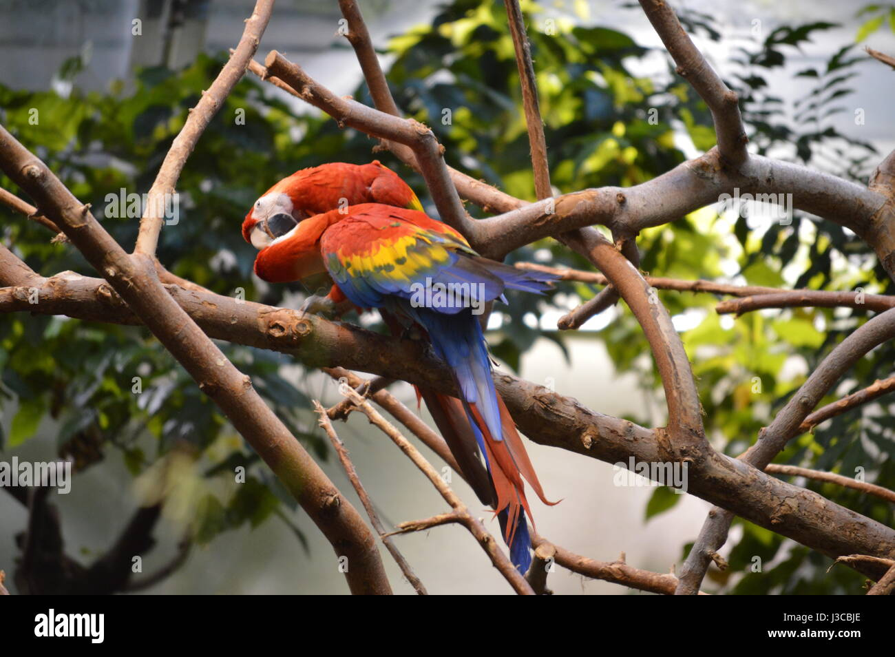 Playful Parrots Bio Dome , Montreal Canada - Stock Image
