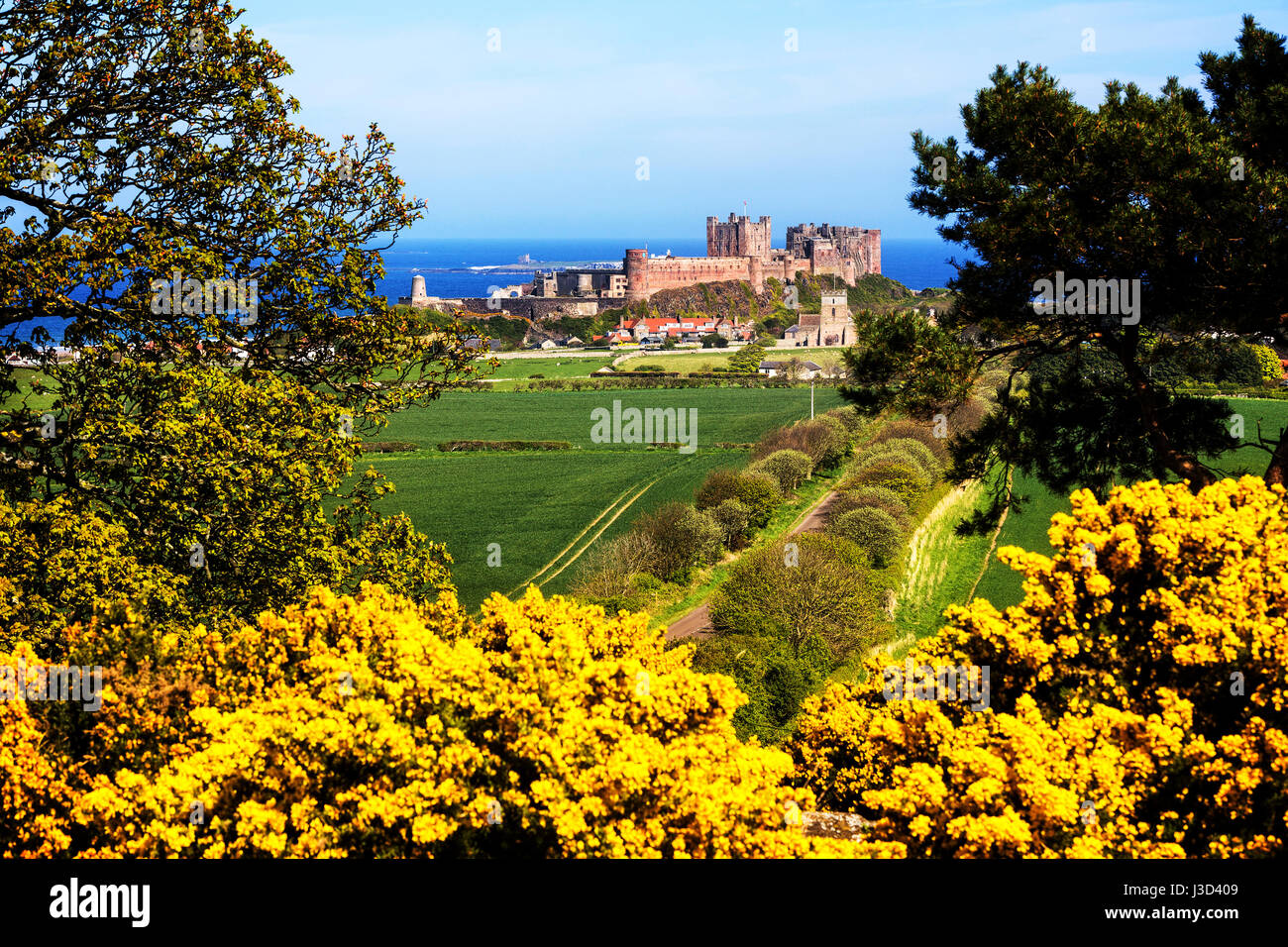 A Photograph of Bamburgh Castle in Northumberland taken during spring from the west of Bamburgh. - Stock Image