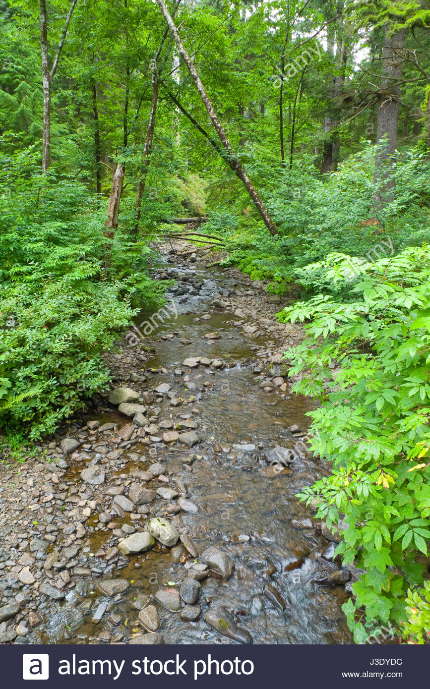 Stream flowing through lush green forest at Oswald West State Park, Tillamook County, Oregon, USA Stock Photo