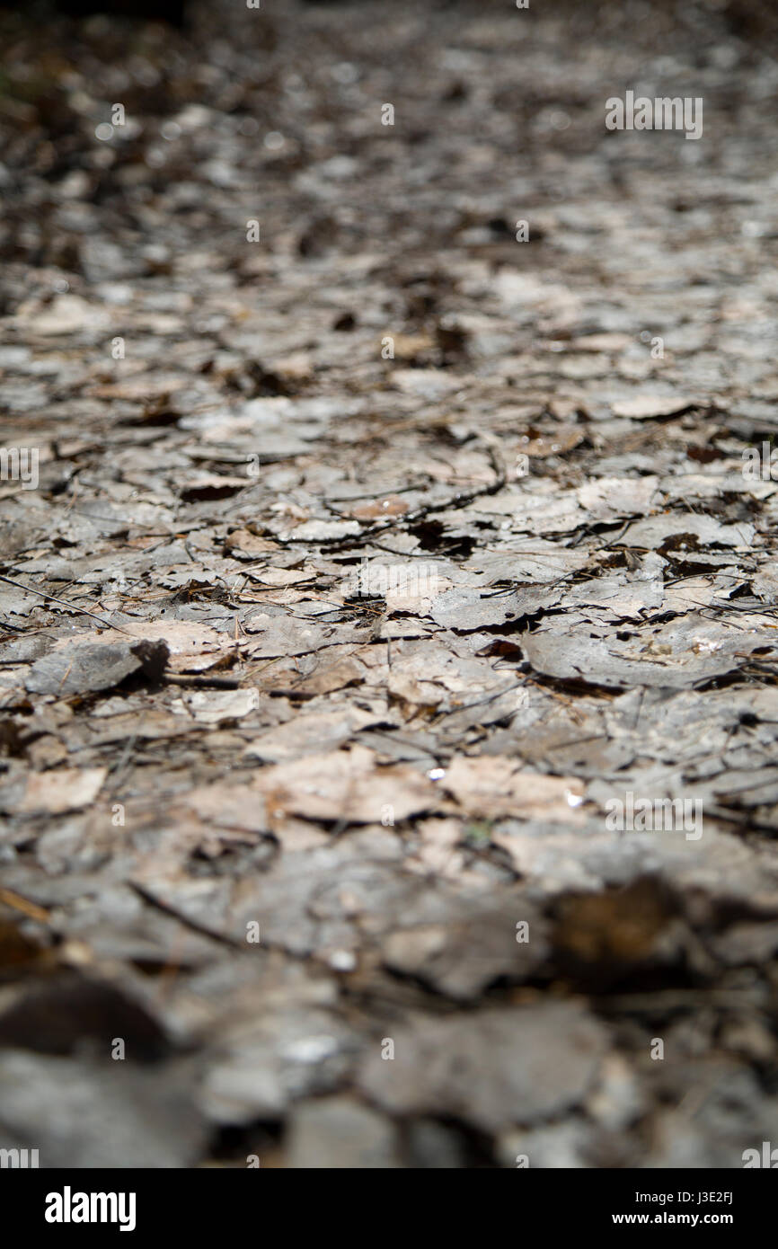 An eye level shot of the forest floor showing decaying leaves. Stock Photo