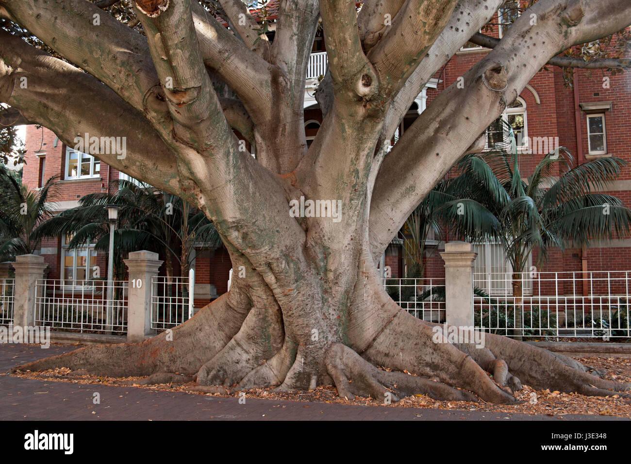 Fig tree Christian dating Perth er radiometrisk dating feil
