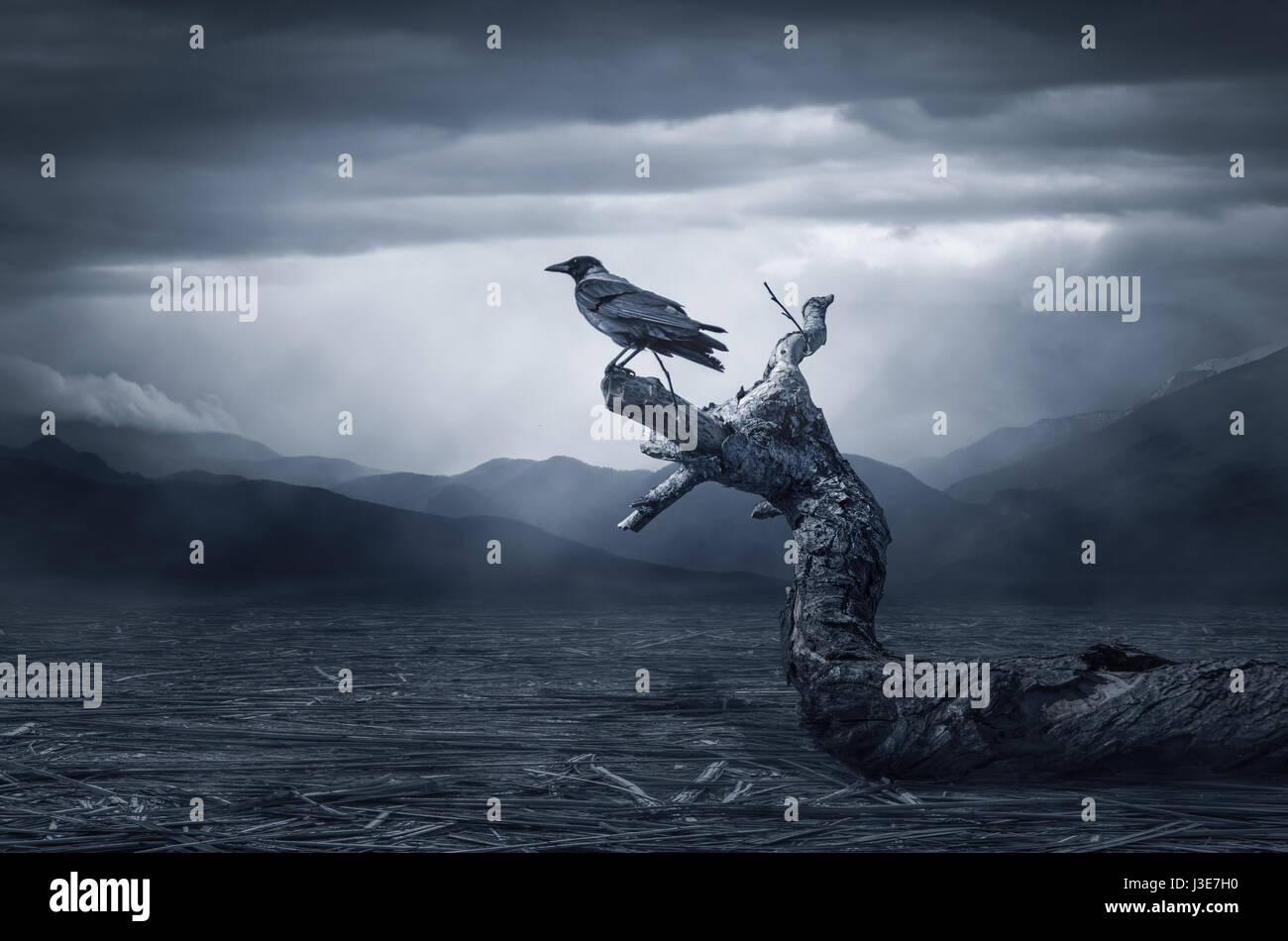 Black raven in moonlight perched on tree. Scary, creepy, gothic setting. Cloudy night. Halloween - Stock Image